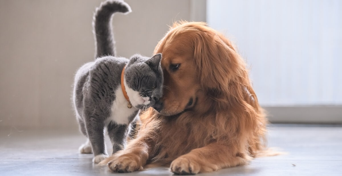grey cat nuzzling up to a red dog on the floor