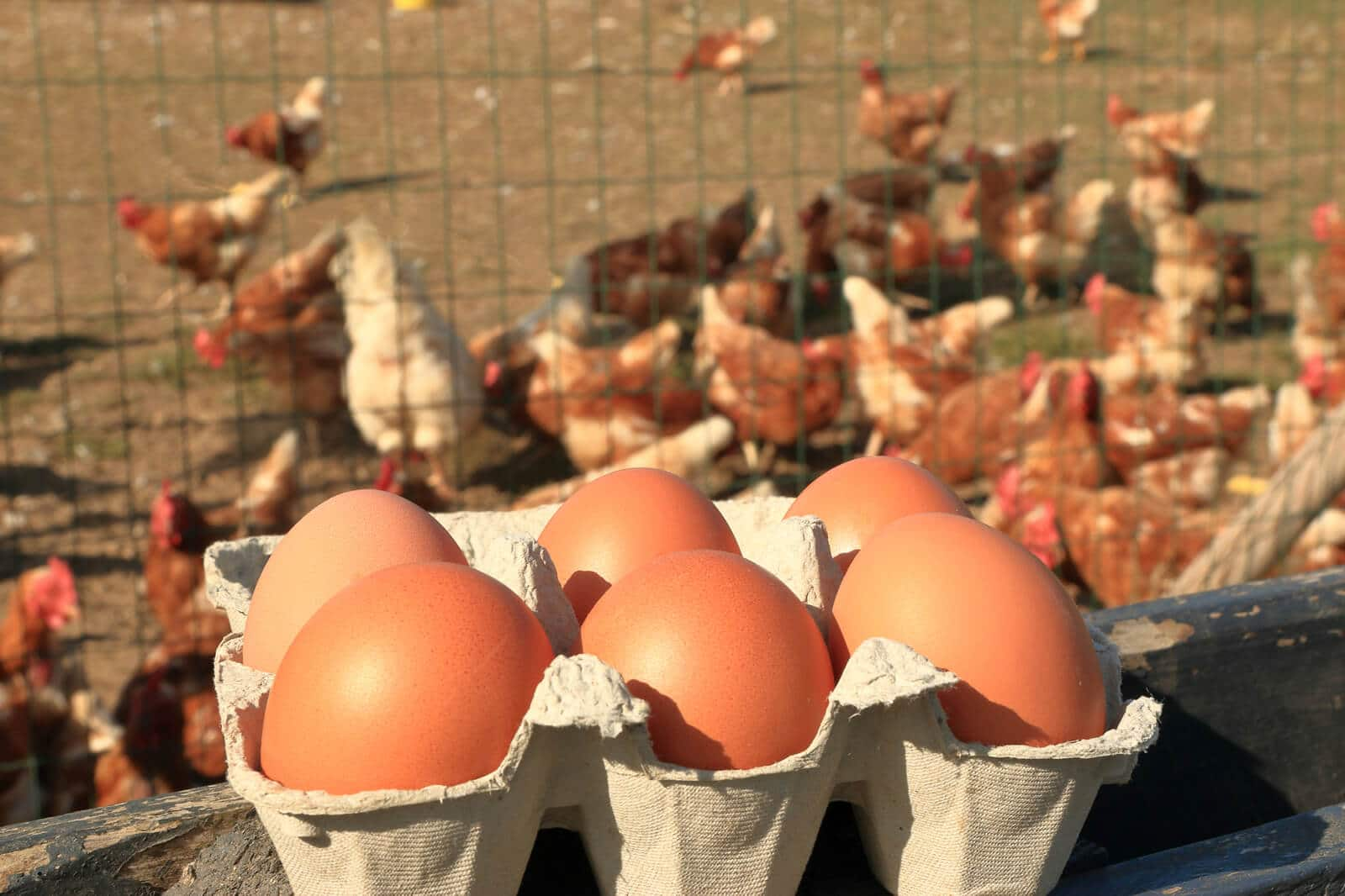 brown eggs in a carton with chickens in the background