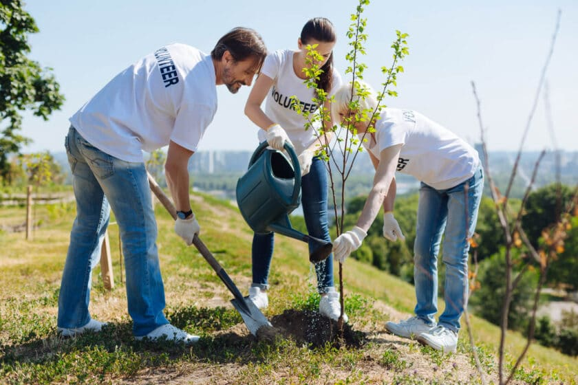 three volunteers planting a tree in a park