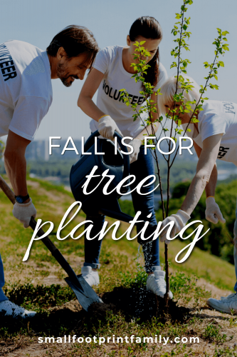 Fall Is For Tree Planting And The More We Plant The