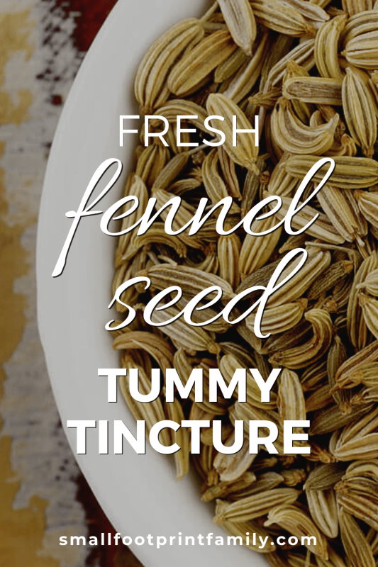 fennel seeds in a white dish
