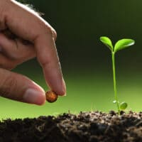 hand planting a seed in soil next to a seedling
