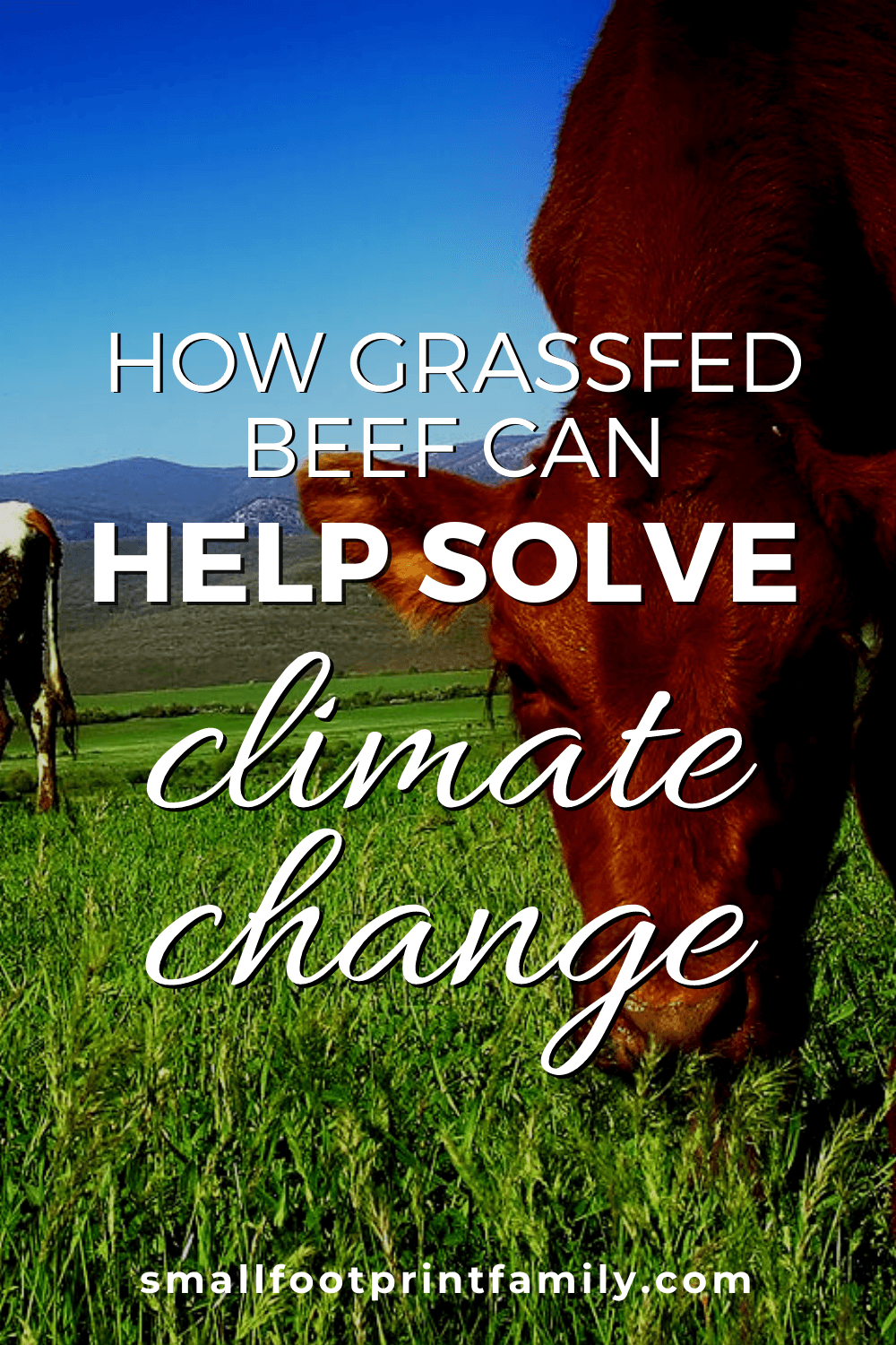 Scientists and ranchers alike see managed grazing as the best solution to desertification, air and water pollution, and even climate change. Here's why.#greenliving #ecofriendly #sustainability #gogreen #naturalliving #climatechange #grassfedbeef #holisticgrazing #sustainableagriculture