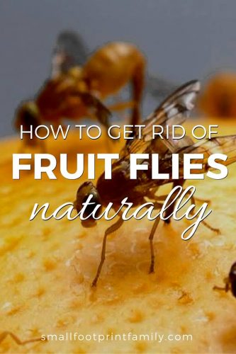 How to Get Rid of Fruit Flies Naturally | Small Footprint Family