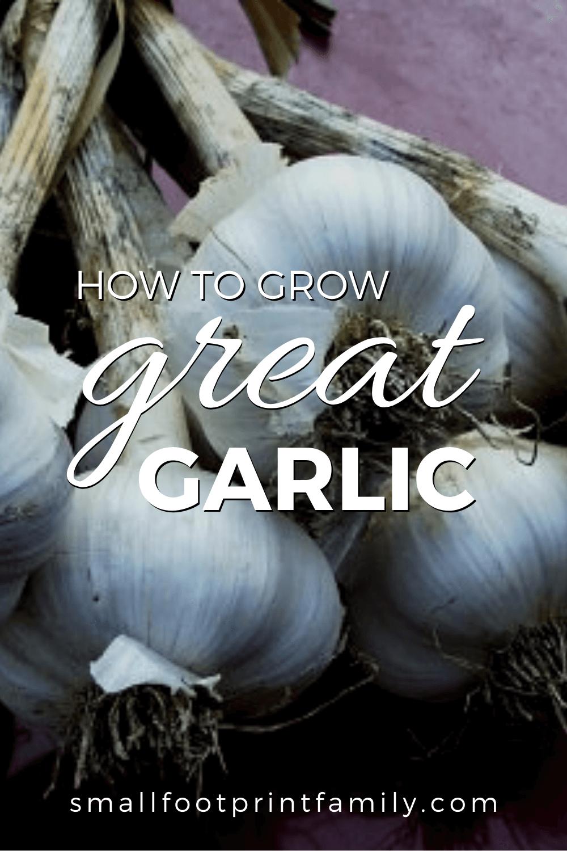 How to Grow Great Garlic