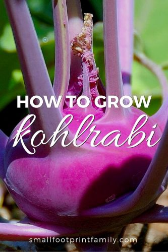 "The name kohlrabi comes from the German ""kohl,"" meaning cabbage, and ""rabi,"" meaning turnip—and that kind of says it all about this delicious, easy-to-grow vegetable. Here's how to grow and enjoy it."