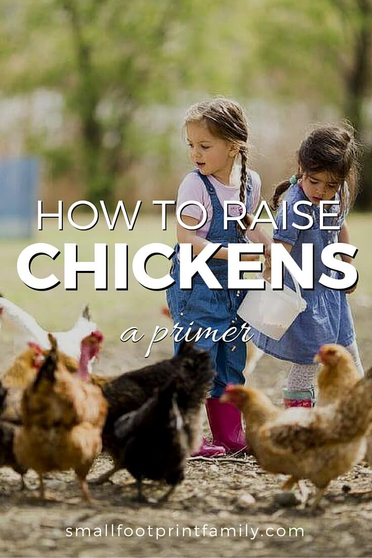 Maybe you've dreamed about having fresh eggs from your backyard every morning, but have also had concerns about tending to a lot of chickens. Raising chickens takes time and effort, but it is an undeniably satisfying hobby. Here's a little about what to expect...#garden #gardening #organicgarden #permaculture #homesteading #urbangarden #backyardchickens #chickens