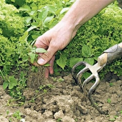 10 Non Toxic Ways To Control Weeds, Weed Control For Gardens