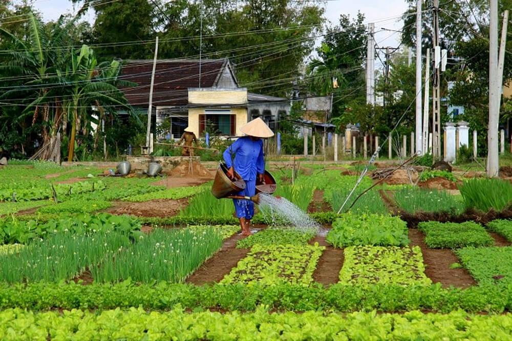 can-organic-farming-feed-the-world