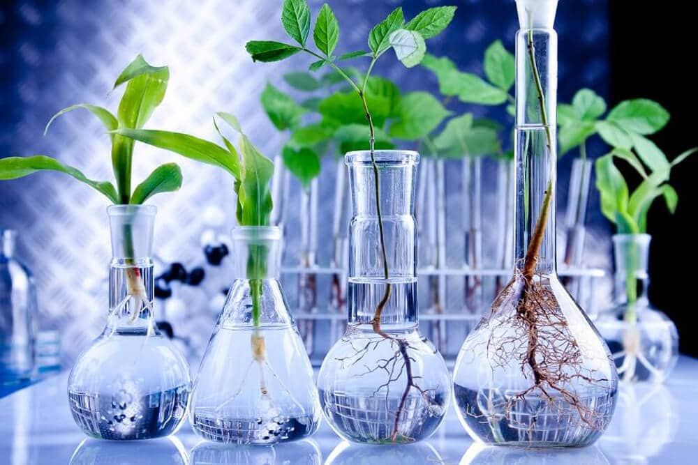 GMO plants in test tubes and beakers