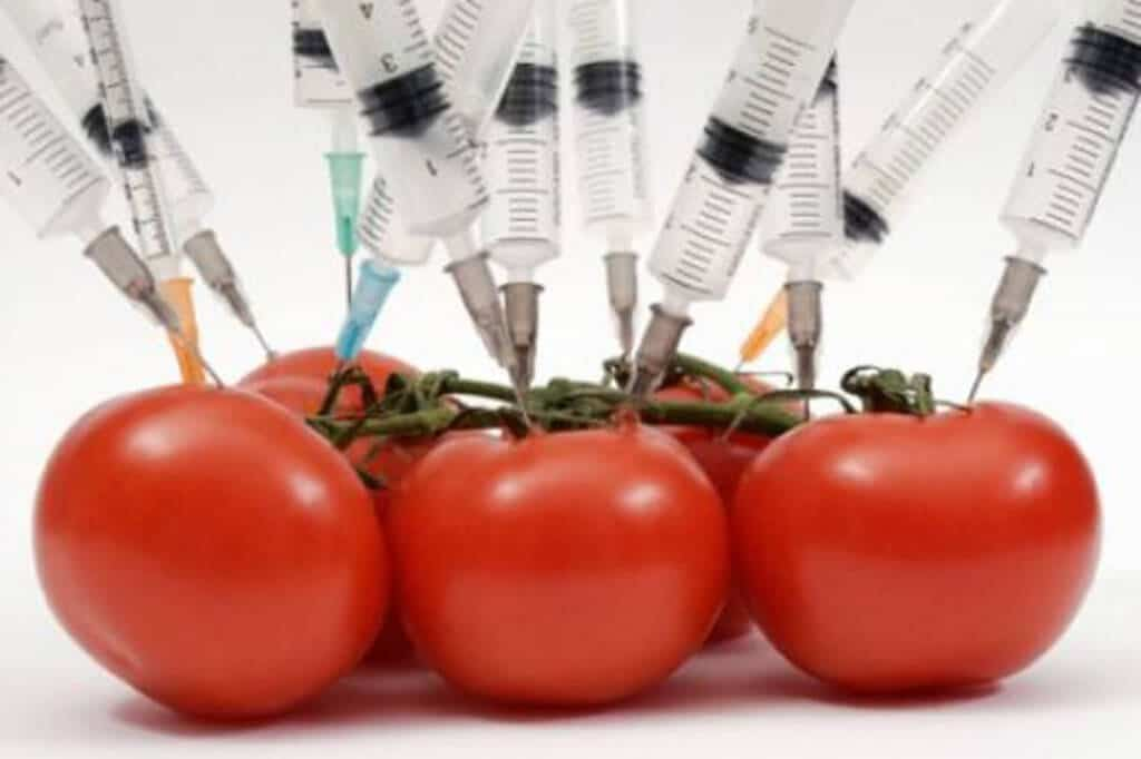 hypodermic needles stuck in fresh tomatoes