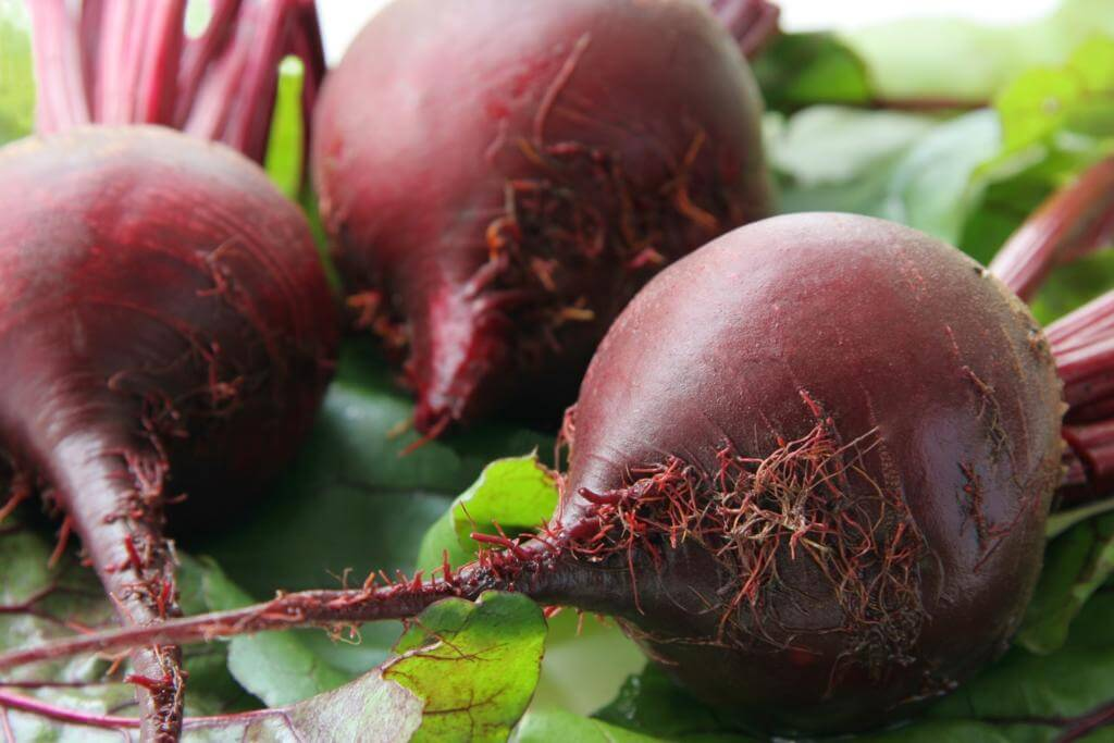 fresh picked beets from the garden