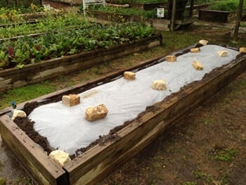 raised garden bed with plastic sheeting used to solarize weeds in the soil